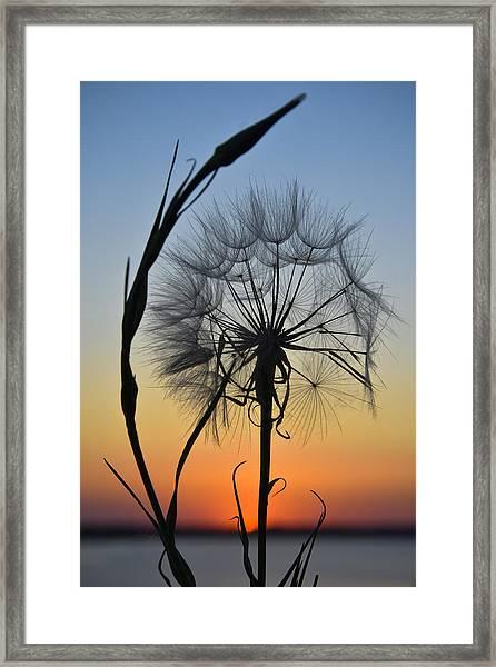Dandy Lion Framed Print