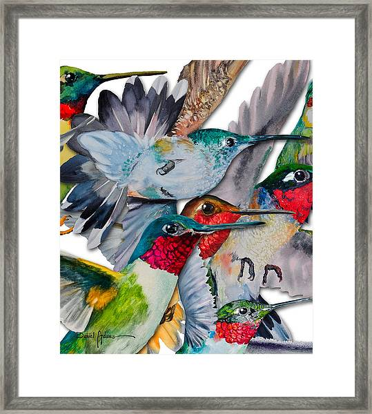 Da133 Hummingbirds By Daniel Adams Framed Print