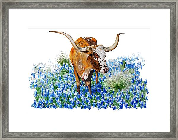 Da102 Longhorn And Bluebonnets Daniel Adams Framed Print