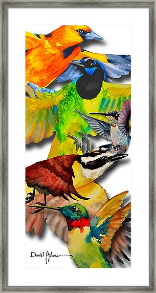 Da131 Multi-birds By Daniel Adams Framed Print