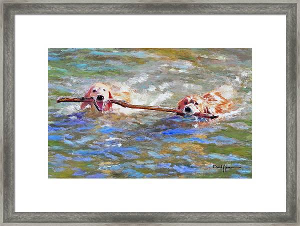 Da152 Sticking Together By Daniel Adams Framed Print