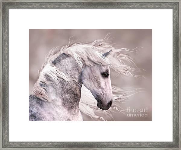 Dappled Grey Horse Head Profile Framed Print