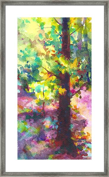 Dappled - Light Through Tree Canopy Framed Print