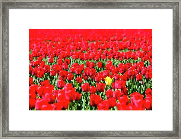 Dare To Be Different Framed Print by Sjo