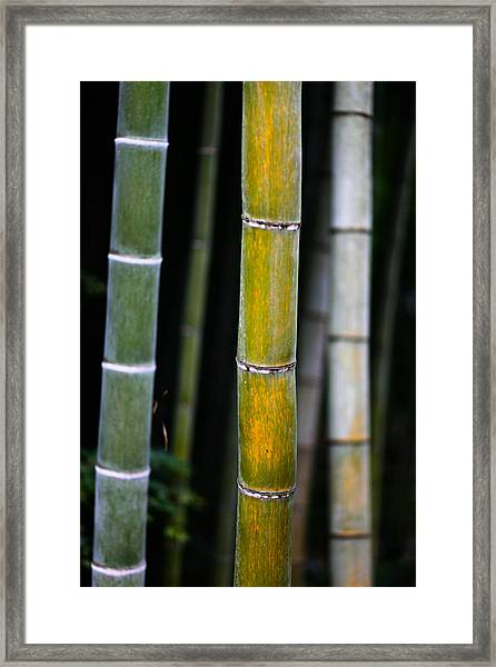Dark Bamboo Framed Print