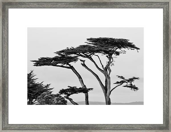 Dark Cypress Framed Print