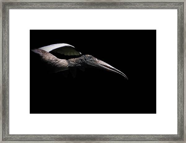Dark Flight Framed Print