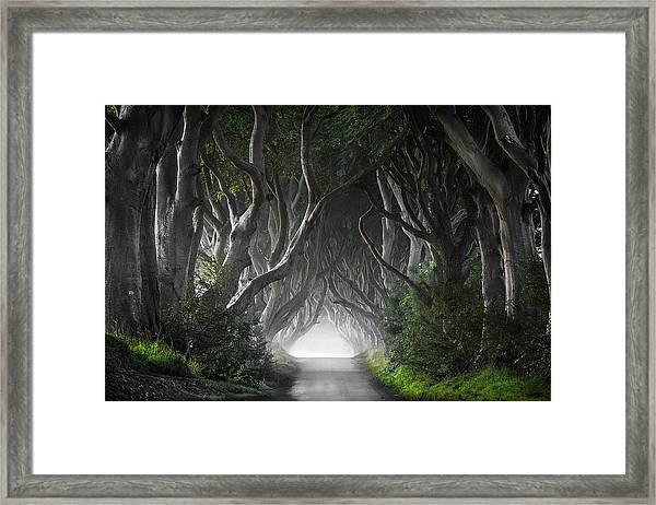 Dark Hedges Framed Print