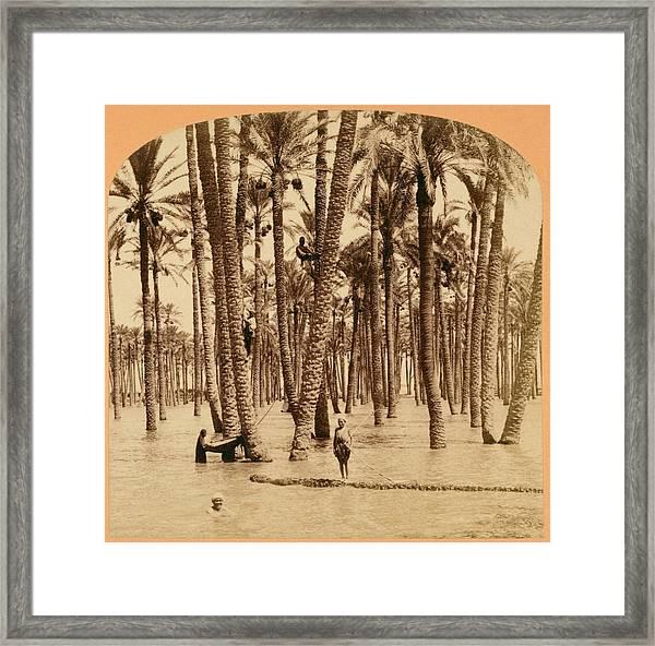 Date Palms And Nile Flood Framed Print