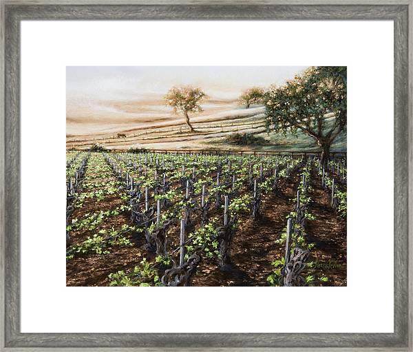 Dawn At Gainey Framed Print