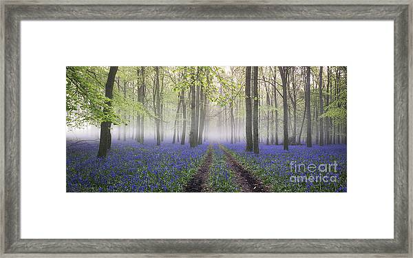 Dawn Bluebell Wood Panoramic Framed Print by Tim Gainey