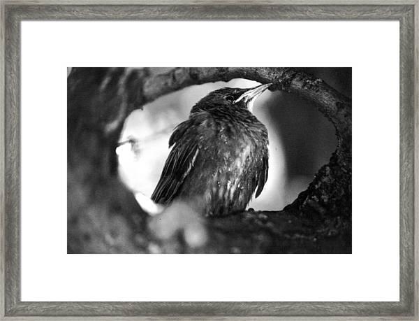 Dax's Bird Framed Print