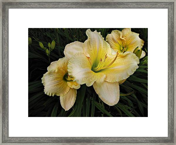 Framed Print featuring the photograph Day Lilies A Short Life by David Dehner