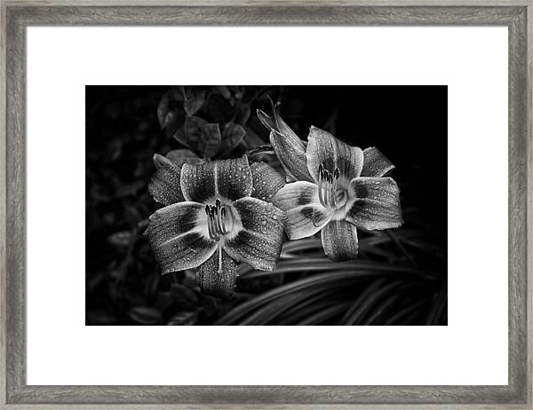 Day Lilies Number 4 Framed Print