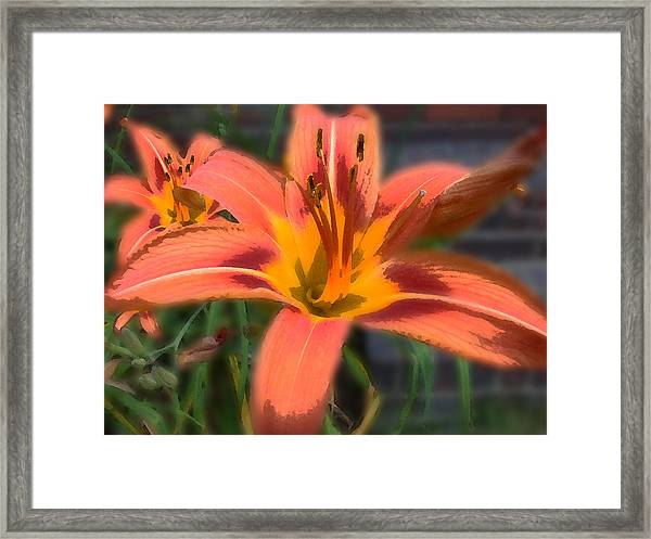 Framed Print featuring the photograph Day Lilly by David Armstrong