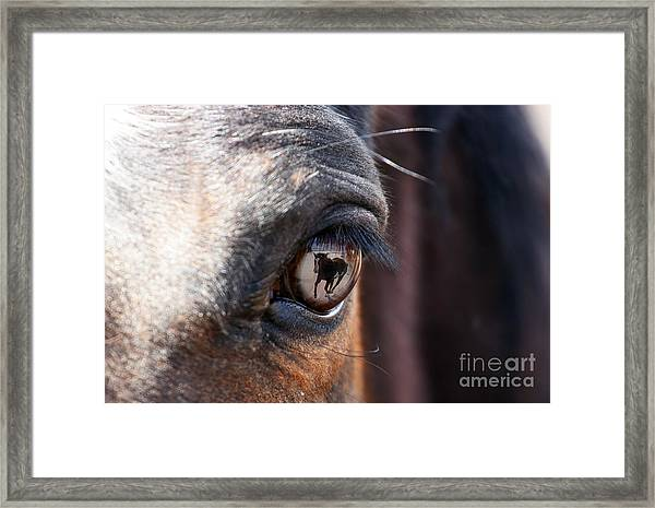 Daydream Of A Horse Framed Print