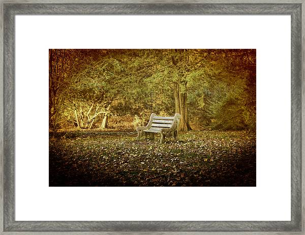 Daydreamer's Bench Framed Print
