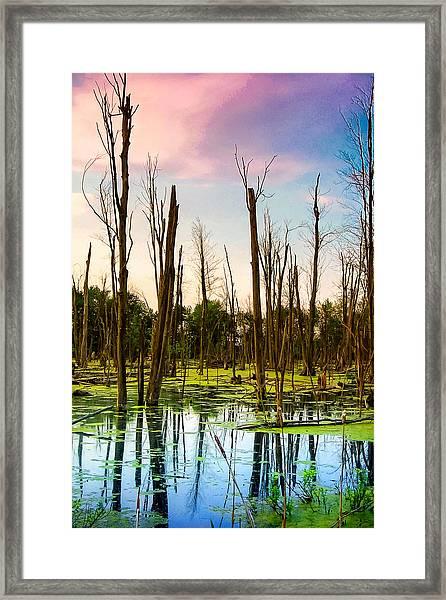 Daylight In The Swamp Framed Print