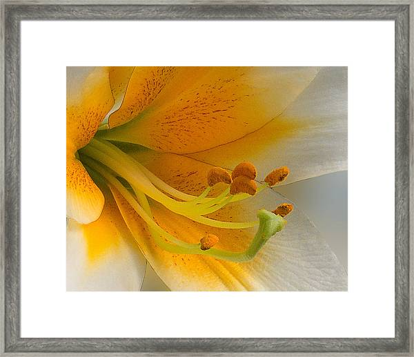 Framed Print featuring the photograph Gold Daylily Close-up by Patti Deters