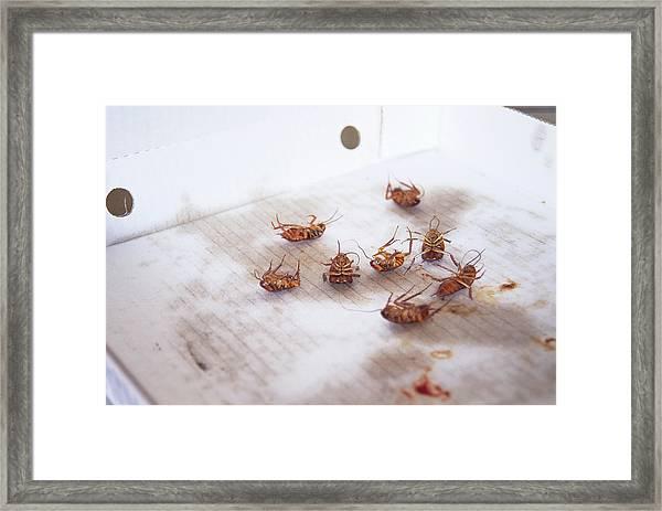Dead Cockroaches Framed Print