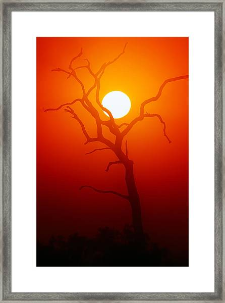 Dead Tree Silhouette And Glowing Sun Framed Print