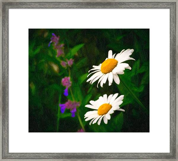 Framed Print featuring the photograph Dear Daisy by Garvin Hunter