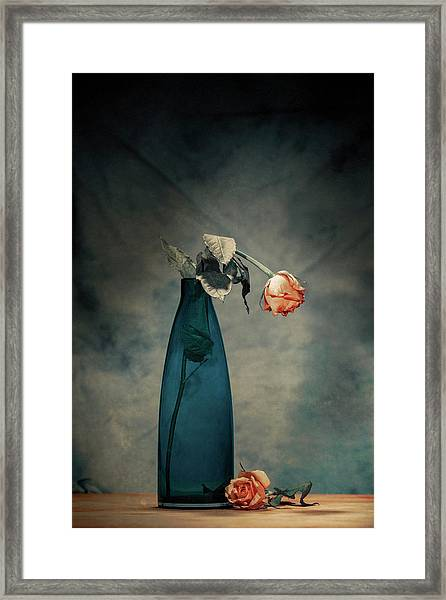 Decay - Dying Rose Framed Print