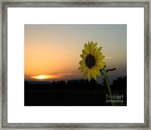 Framed Print featuring the photograph Sunflower And Sunset by Mae Wertz
