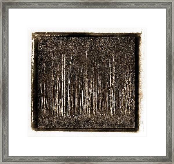 Deep Forest Framed Print