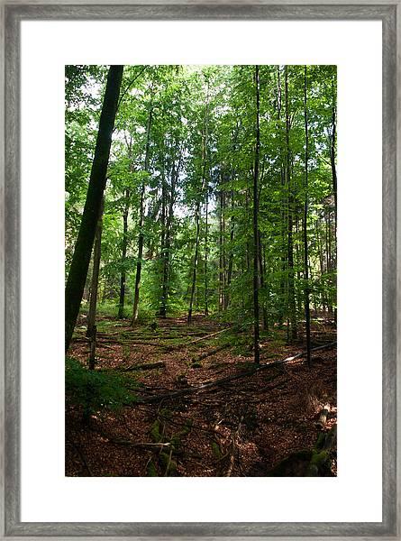 Deep Forest Trails Framed Print