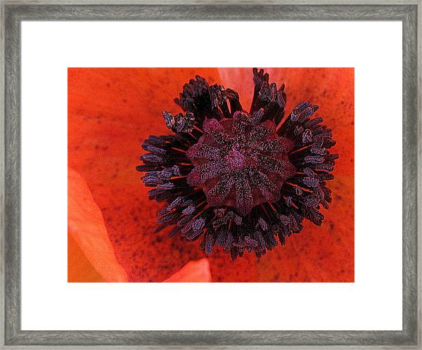 Deep In Bloom Framed Print