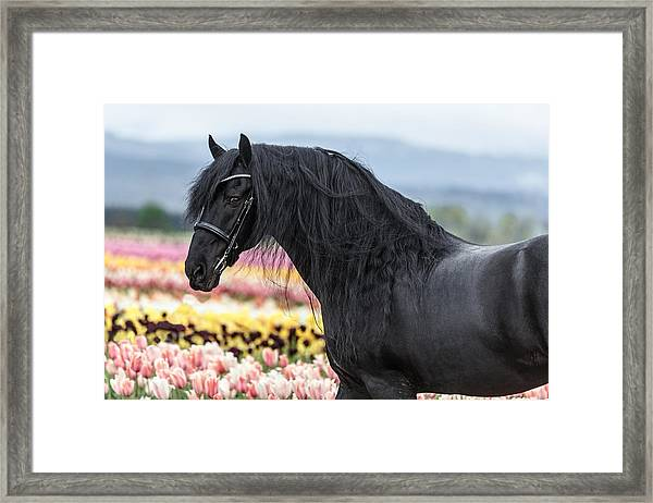 Deep In The Fields Framed Print