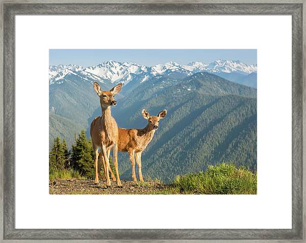 Deer And Mountains Framed Print by Kencanning