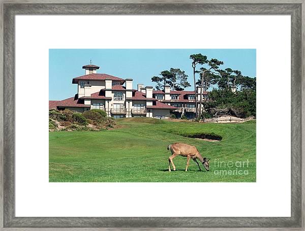 Deer At Spanish Bay Framed Print