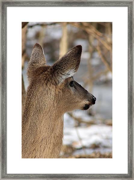 Deer Day Dreamer Framed Print
