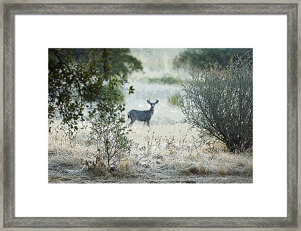 Deer In A Meadow Framed Print