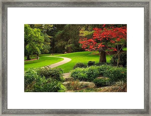 Deer In Lithia Park Framed Print