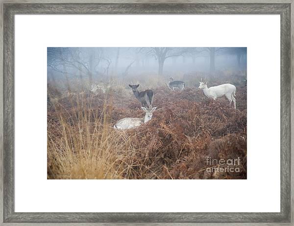 Deer In The Mist Framed Print by Donald Davis