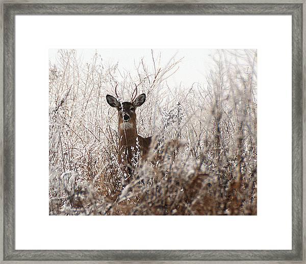 Deer In Winter Framed Print