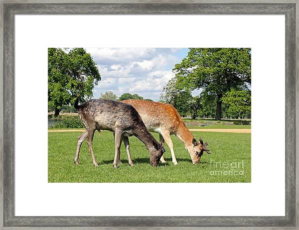 Two Deer Framed Print