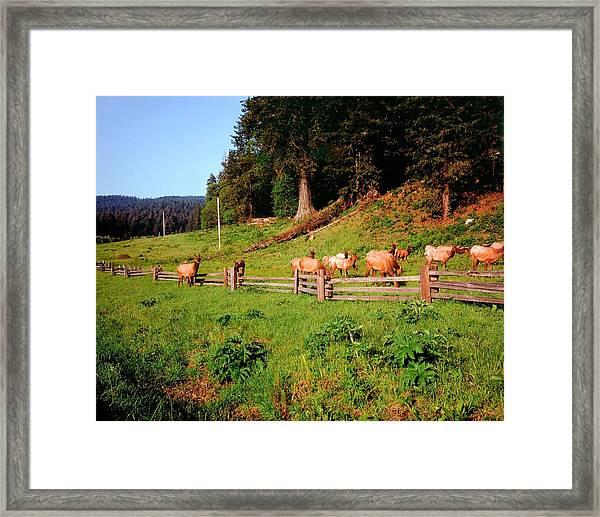 Deer No Hunting Here Framed Print