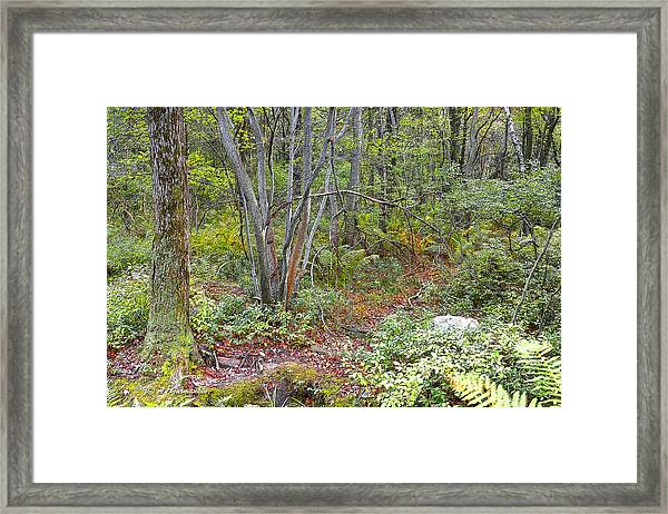 Deer Trail Early Autumn Pocono Mountains Pennsylvania Framed Print