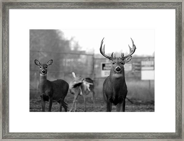 Deer Trio Framed Print
