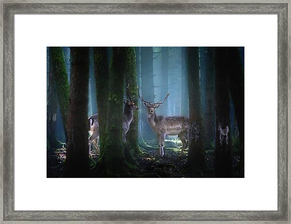 Deers Framed Print by Patrick Aurednik
