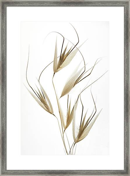 Delicacy Of Nature Framed Print by Shogun