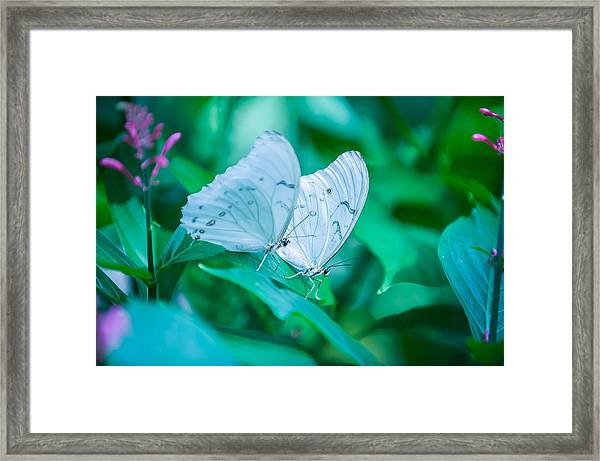 Delicate Twins Framed Print