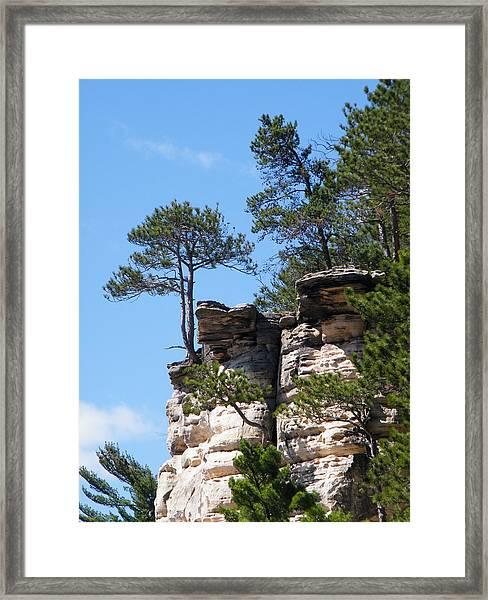Dells Tree Framed Print