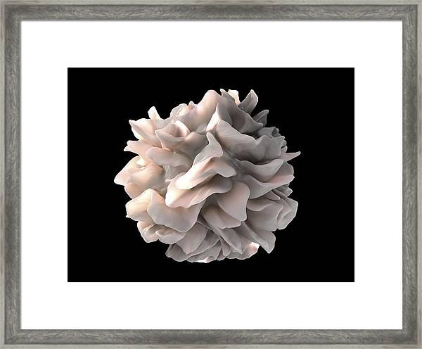 Dendritic Cell, Sem Framed Print