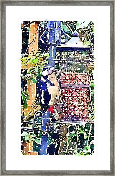 Dendrocopos Major 'great Spotted Woodpecker' Framed Print