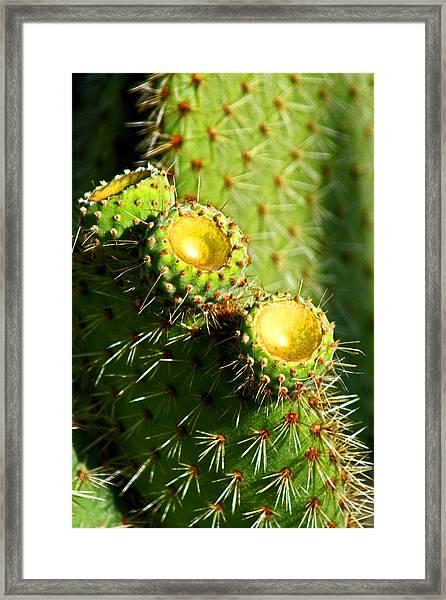 Desert Flowers Framed Print